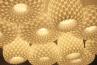Adamlamp Ellipse Lights, Pendant Light group,